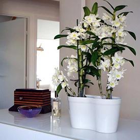 Plantes et fleurs décoratives