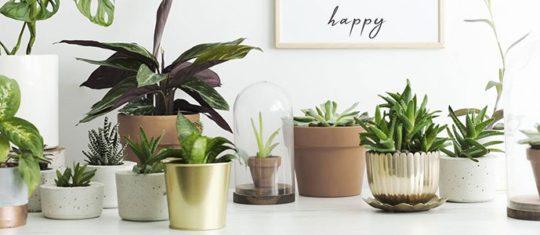 En décoration intérieure ou extérieure, des tendances s'expriment par le choix de plantes. Quel est le meilleur moyen de se procurer des plantes qui suivent les tendances en decoration ?