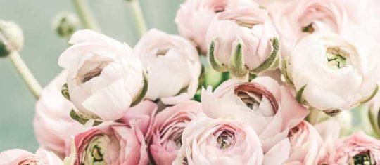 fleuristes en ligne