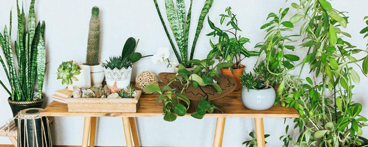 Installer des plantes d'intérieur